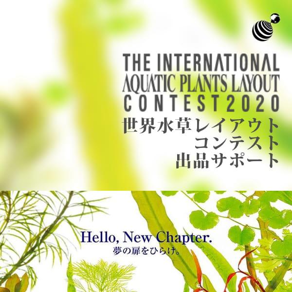 世界水草レイアウトコンテスト出品サポート