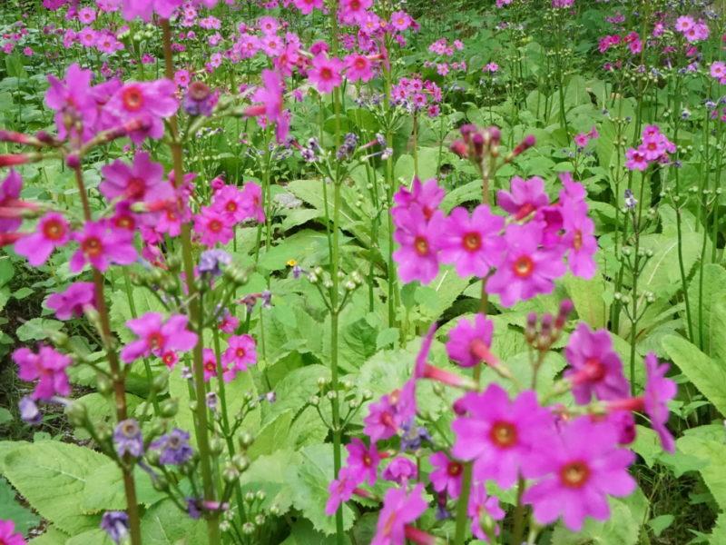 六甲山植物園01