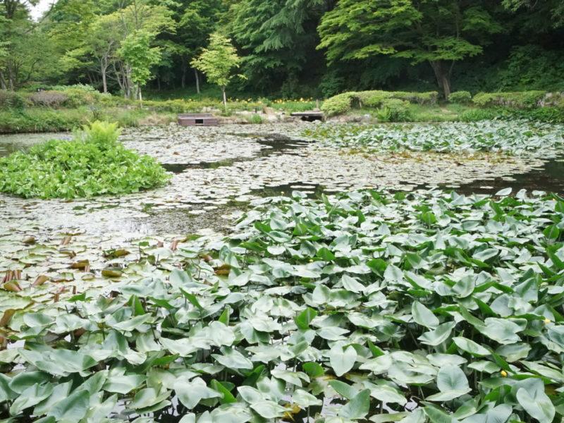 六甲山植物園05