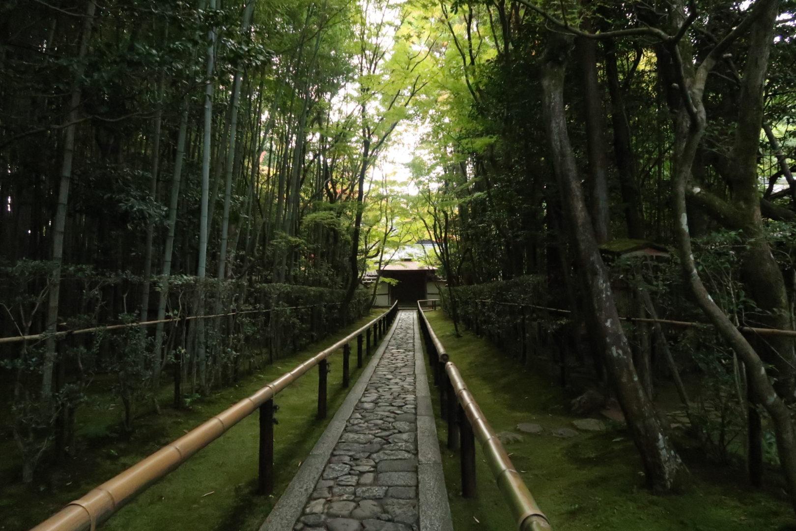 京都苔をもとめて
