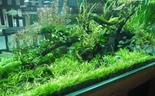 水辺の植物カンタン栽培セット+@