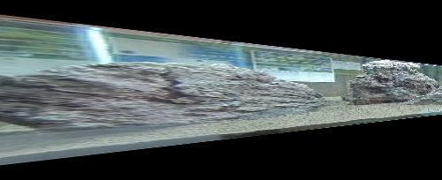 2400水槽レイアウトと当店レイアウト水槽状況