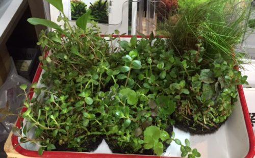 侘び草、Bioみずくさの森セール