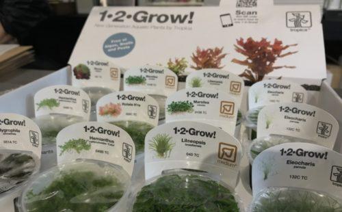 トロピカ社 組織培養水草 1-2-G入荷です。