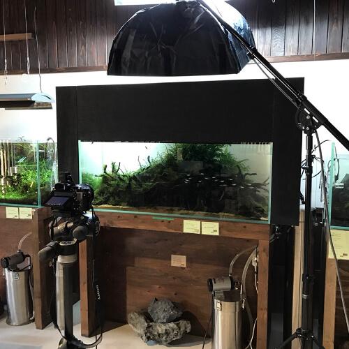 世界水草レイアウトコンテスト出品サポート 撮影風景