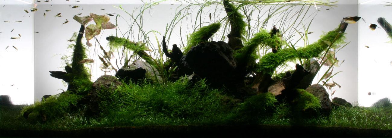 陰性水草、凸型と背景に揺らぎの空間をもたらした構図