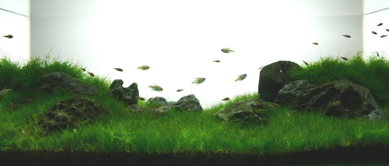 石組単植と草原をイメージした凹型構図
