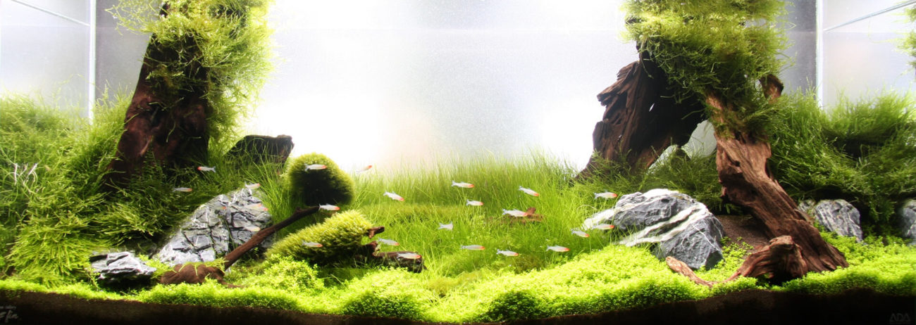 緑一色と赤系の魚種のバランスレイアウト