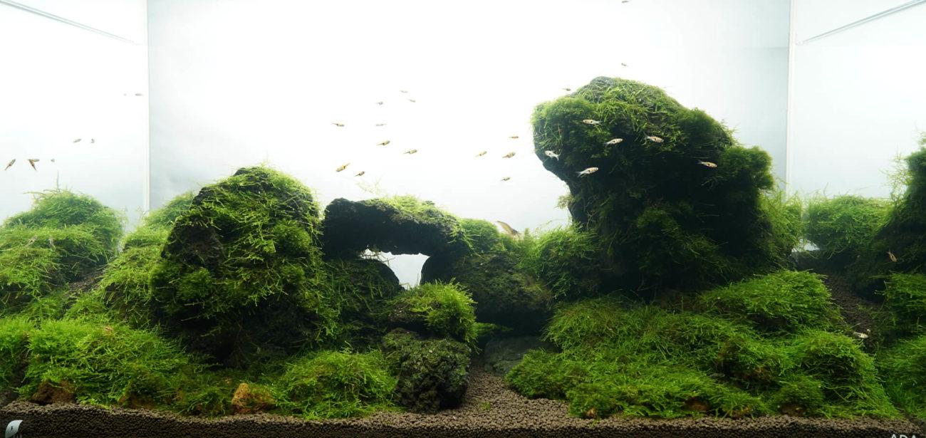苔山をイメージしたレイアウトです。