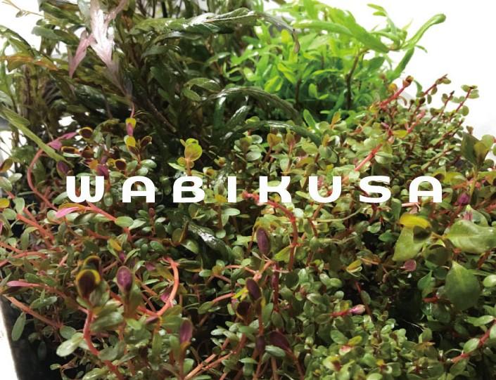 wabikusa_logo