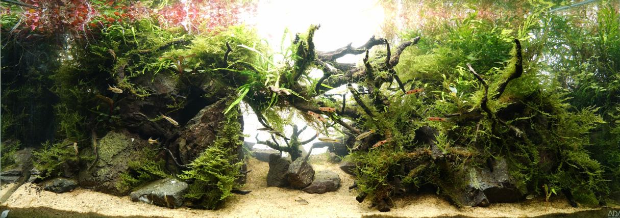 水草の成長過程、陰性と陽性の調和