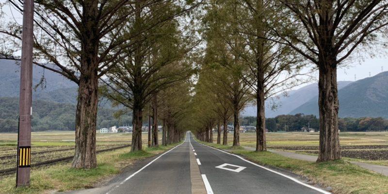 近江八幡とメタセコイヤ並木