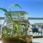 小さな器で水草を楽しむ