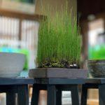 めだか用の鉢、水辺MIX追加、BIOTOP用水草など入荷しました・・・