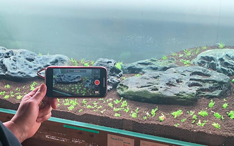 Plants Hobby Tele Work イメージ