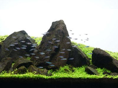 IAPLC2020 山水の景
